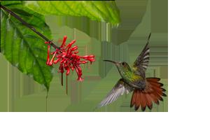 hummingbird-250
