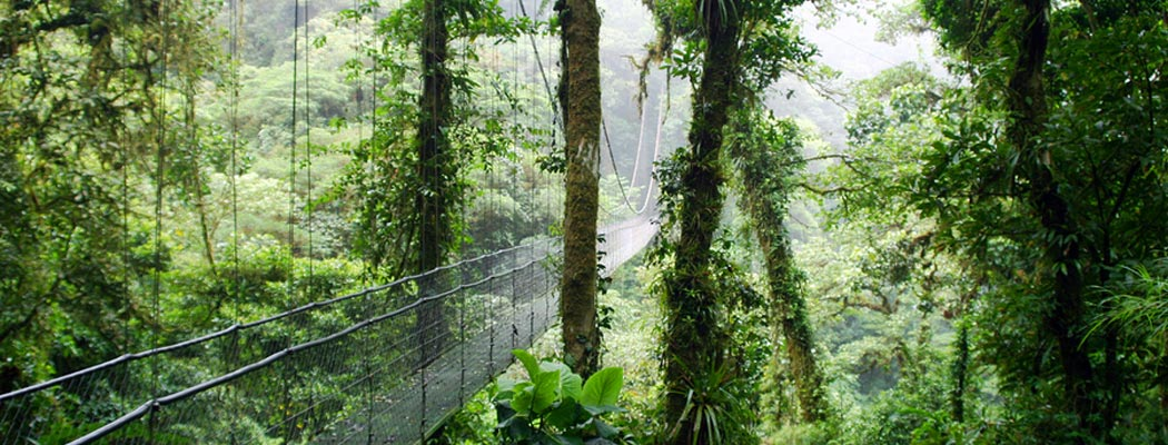 cloud-forest-in-monte-verde-costa-rica
