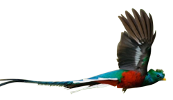 Palo Verde Boat Tours - Quetzal - Costa Rica